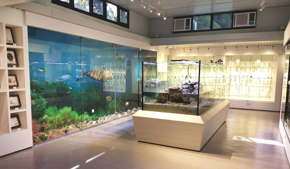 Forest City Eco Museum Phase 1 Exhibition Hall