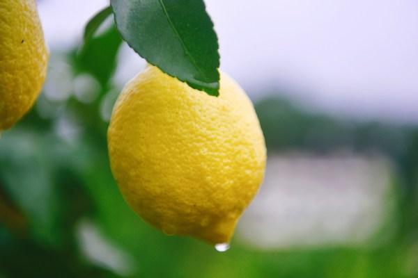 Pendapatan bernilai 56 Juta Dolar: Persidangan Pembangunan Industri Lemon Dunia Kedua Bermula di Anyue, China