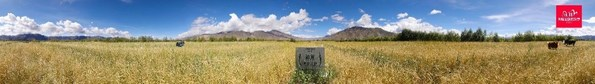 自然堂草场实景画面