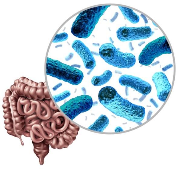 聚焦全球益生菌市场,为营养行业提供了更好的解决方案
