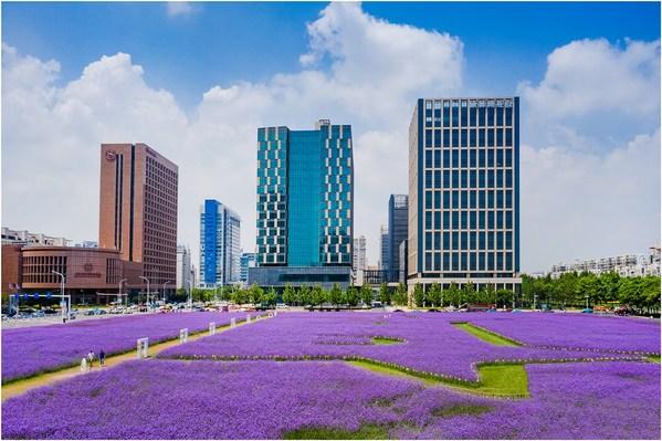 A photo of green Binhai