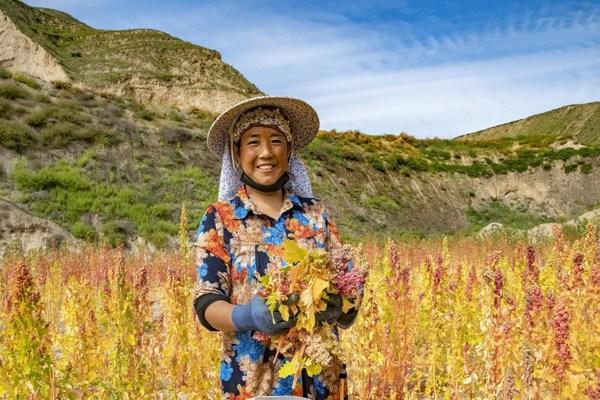 """โครงการบรรเทาความยากจนของ """"ซิโนเปค"""" ช่วย 8 อำเภอในจีนหลุดพ้นจากความยากจน สอดรับเป้าหมายการพัฒนาที่ยั่งยืนของยูเอ็น"""