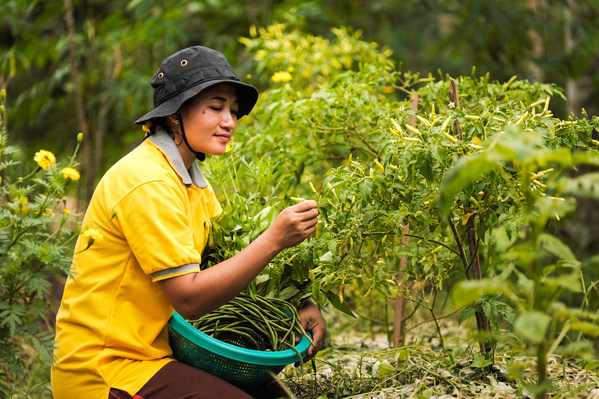 Sinar Mas Agribusiness and Food berkolaborasi dengan beberapa mitra, termasuk Universitas Wagenigen, Belanda dalam melaksanakan Program Mata Pencaharian Alternatif melalui implementasi Pertanian Ekologis Terpadu.