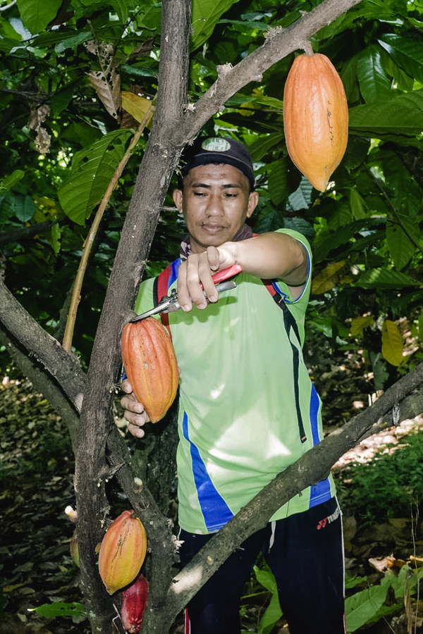Varian produk lengkap Van Houten Professional mengandung kakao lestari yang 100% dipasok secara berkelanjutan melalui program Cocoa Horizons Foundation yang  berdampak positif bagi kehidupan petani kakao dan komunitasnya di Sulawesi
