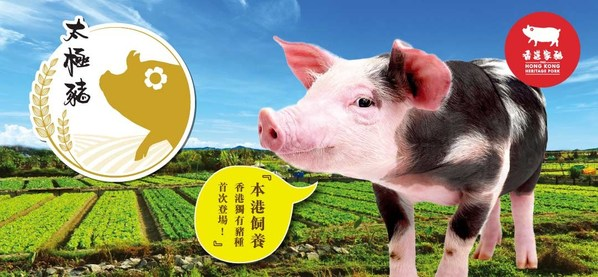 Hong Kong Heritage Pork: Japanese Roppaku-kuro pigs & Danish Landrace pigs successfully bred for high-quality black and white pigs
