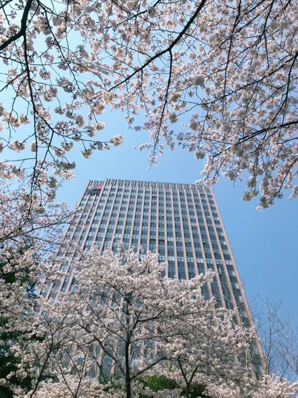 Tickled pink: Agoda's guide to experiencing spring blossoms 2021