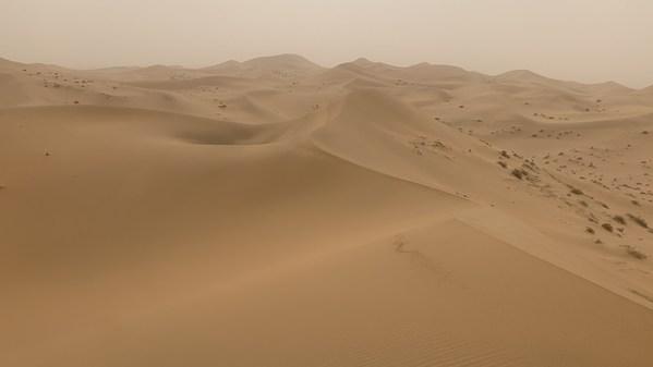 液化空气中国将在内蒙古阿拉善种植10万棵梭梭