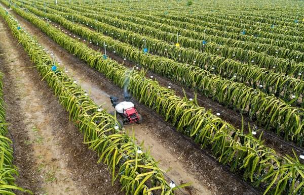 极飞R150农业无人车为火龙果园提供精准喷洒服务