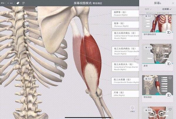 功能强大的解剖学软件Complete Anatomy 中文版正式上线