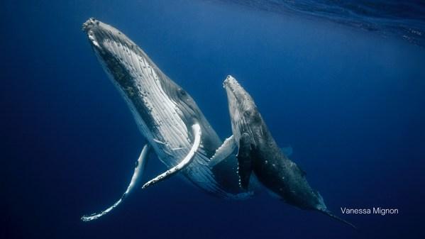 世界地球日,Canva可画和Pexels举办摄影展支持生态保护