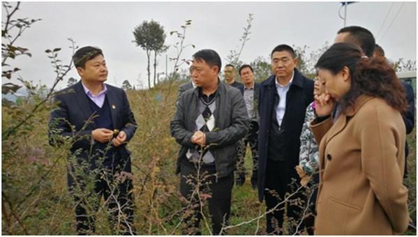 广药集团调研工作组赶赴贵州深入调查刺梨产业