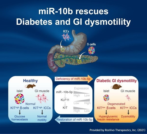 The world's first-in-class miRNA therapeutics to cure diabetes by pancreatic beta cell regeneration