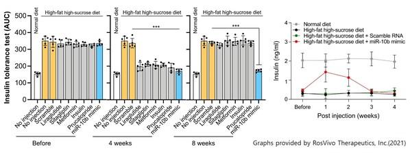 miRNA新薬注射後のインスリン抵抗性と分泌の変化