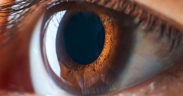 視力のための一滴:超高濃度ルテインの開発で日本が再び大躍進