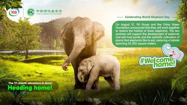 Yili đưa ra cam kết bảo vệ các khu bảo tồn voi hoang dã vào Ngày voi thế giới 2021