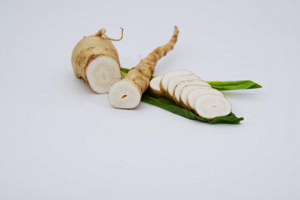 新鲜的菊苣根