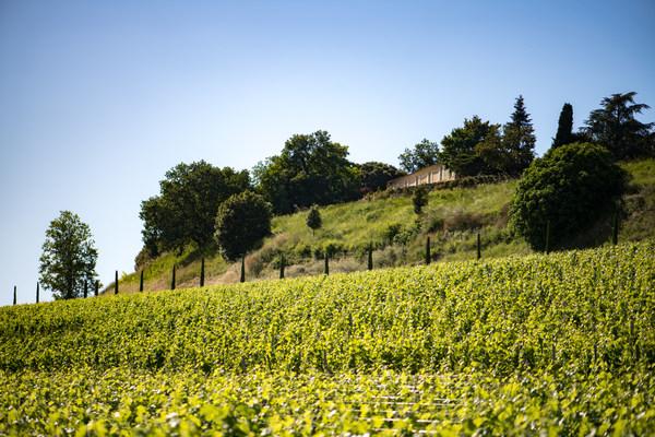 昆塔斯酒庄收购格兰庞特酒庄,继续蓬勃发展