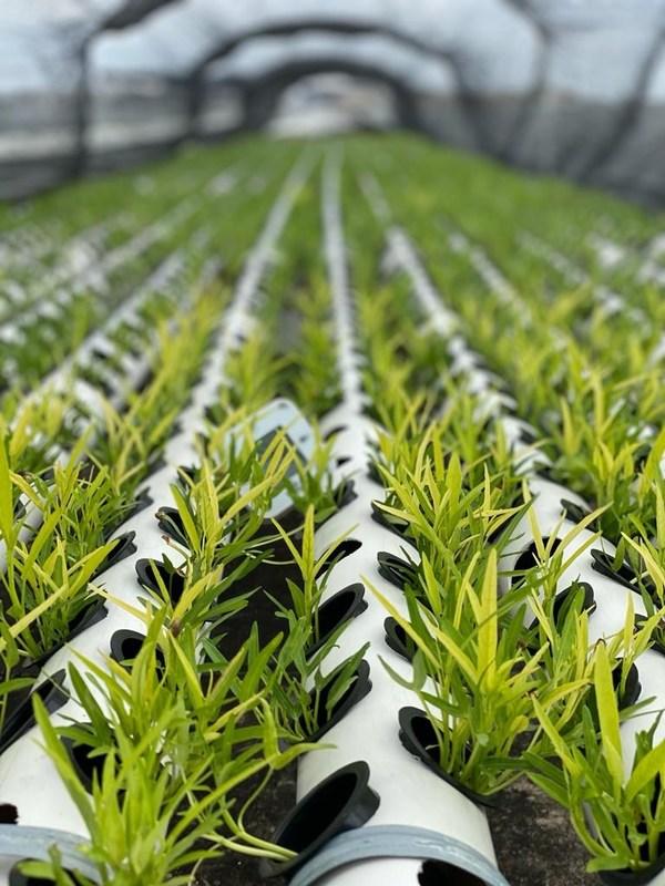 Flex Singapore Launches Rooftop Farming Initiative at Kallang